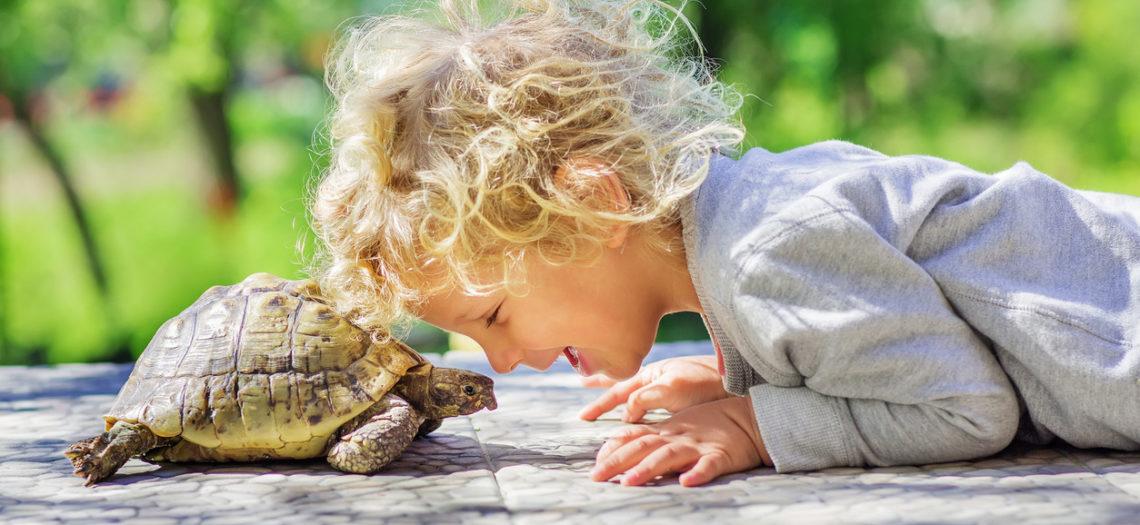 """La técnica de la """"tortuga"""" para aprender a controlar los impulsos"""