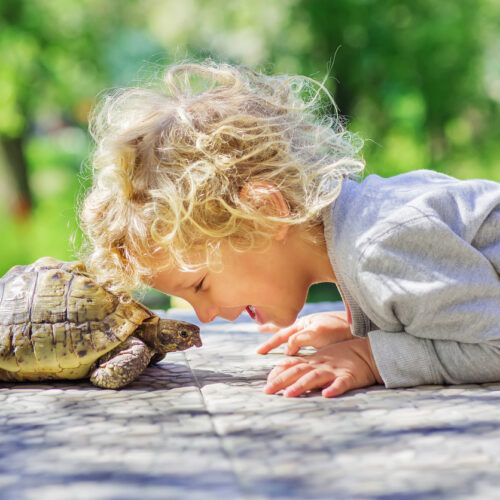La técnica de la «tortuga» para aprender a controlar los impulsos